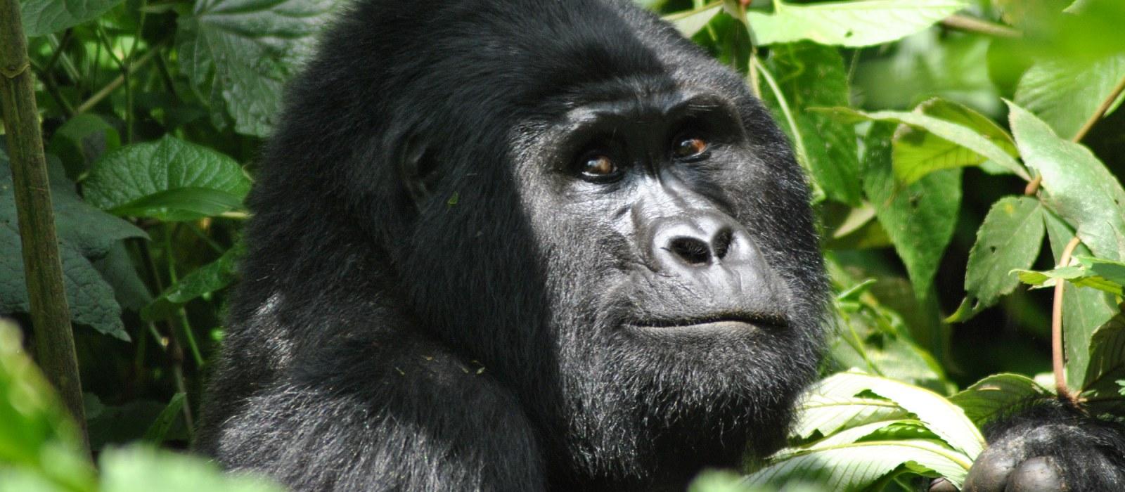 Uganda: Fernreisen zu zweit